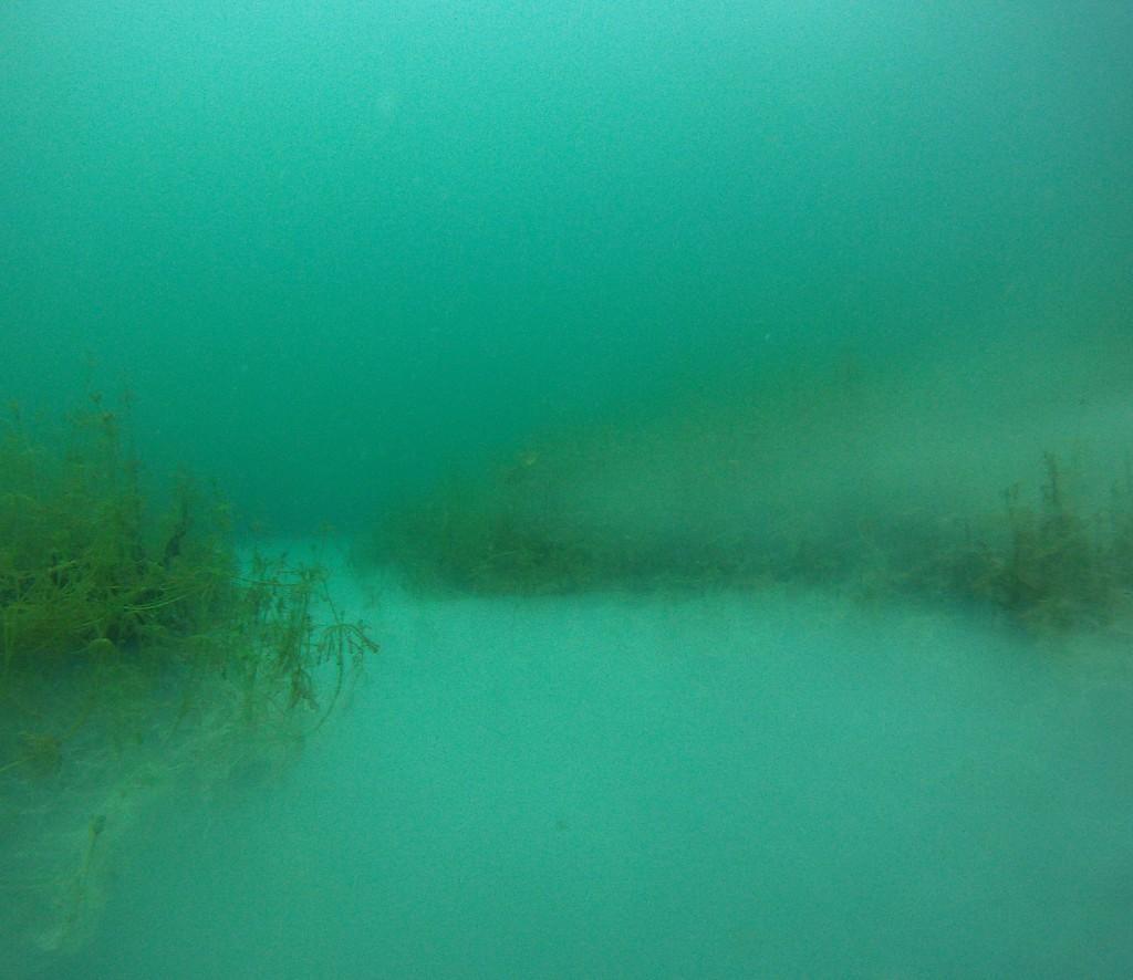 Nebel Echinger Weiher