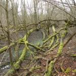 Naturbelassener Auwald an der Amper