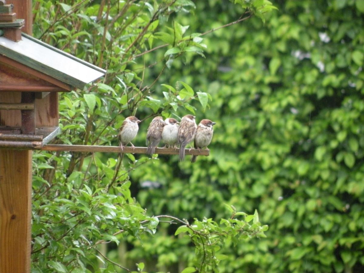 Fünf Spatzen am Vogelhaus