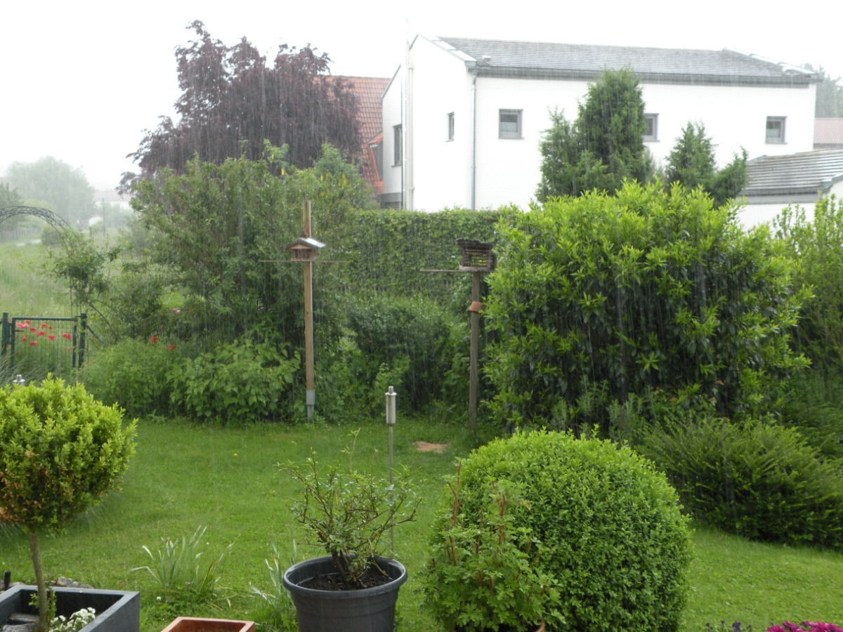 Starker Regen im Garten