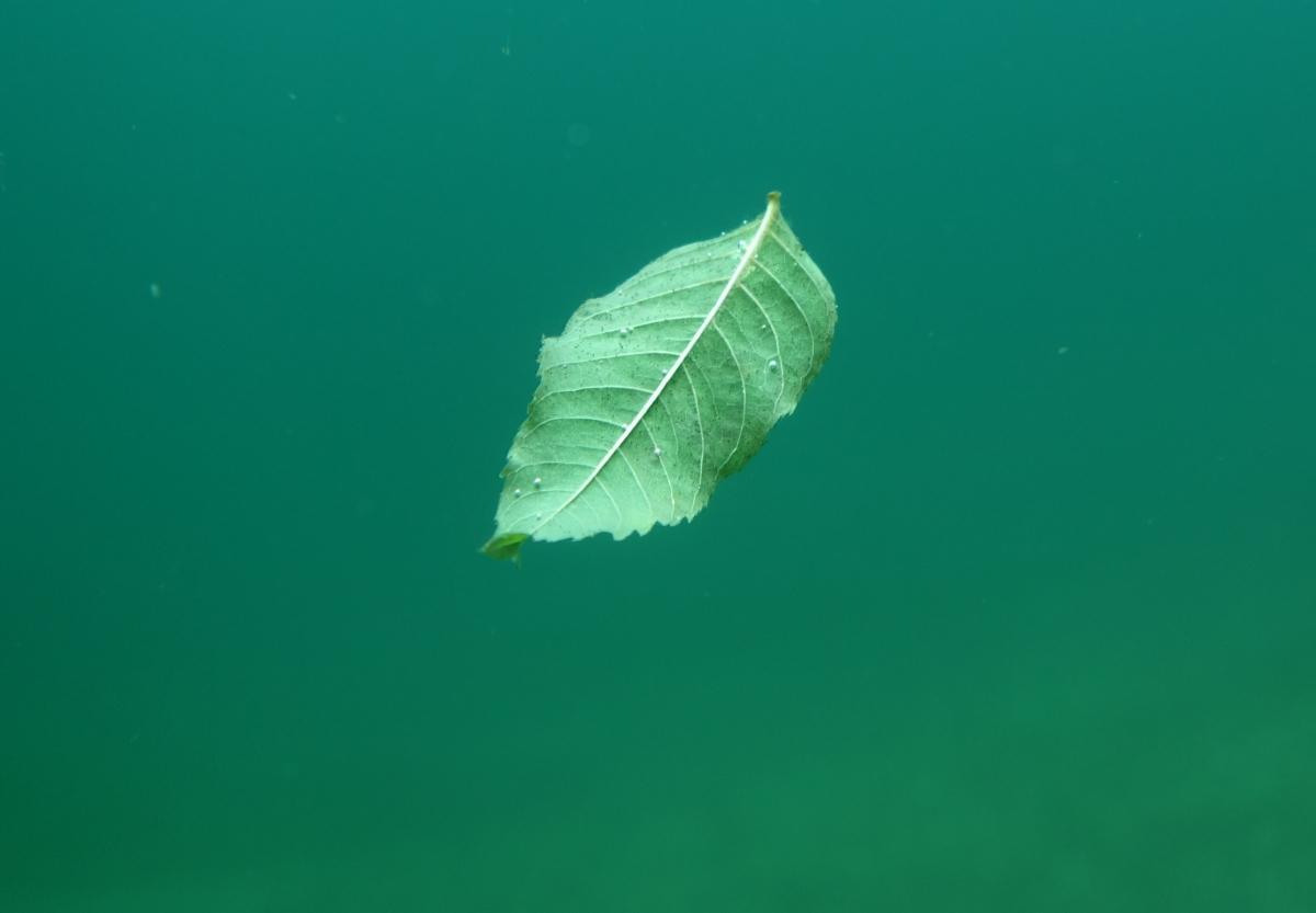 Im Wasser schwebendes Blatt