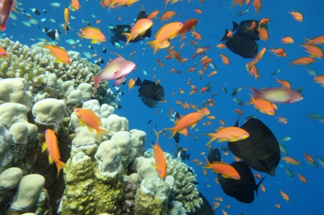 Bunte Fischschwärme auf dem Riffdach