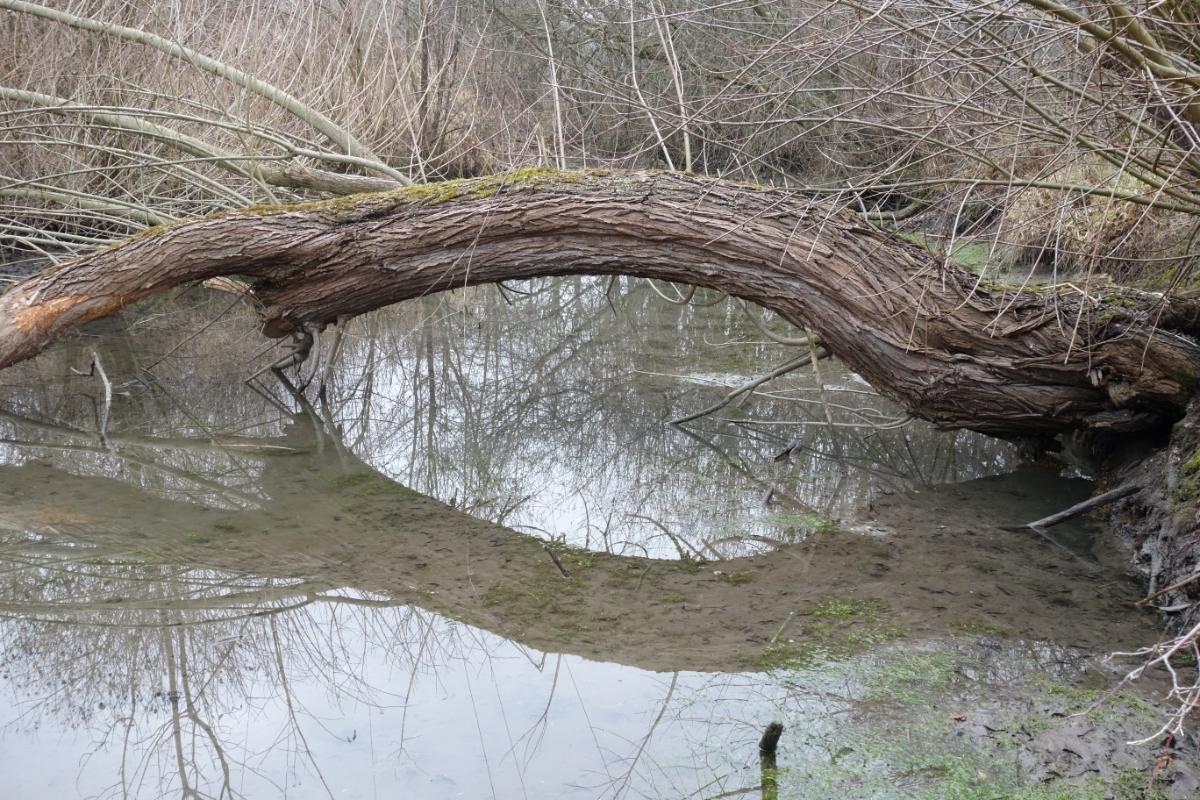 Sich im Wasser spiegelnder Baum
