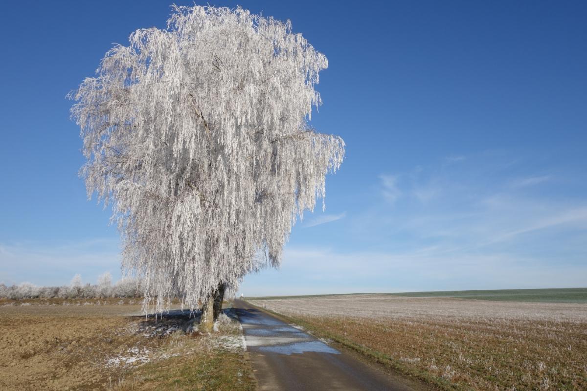 Vereister Baum in Hebertshausen