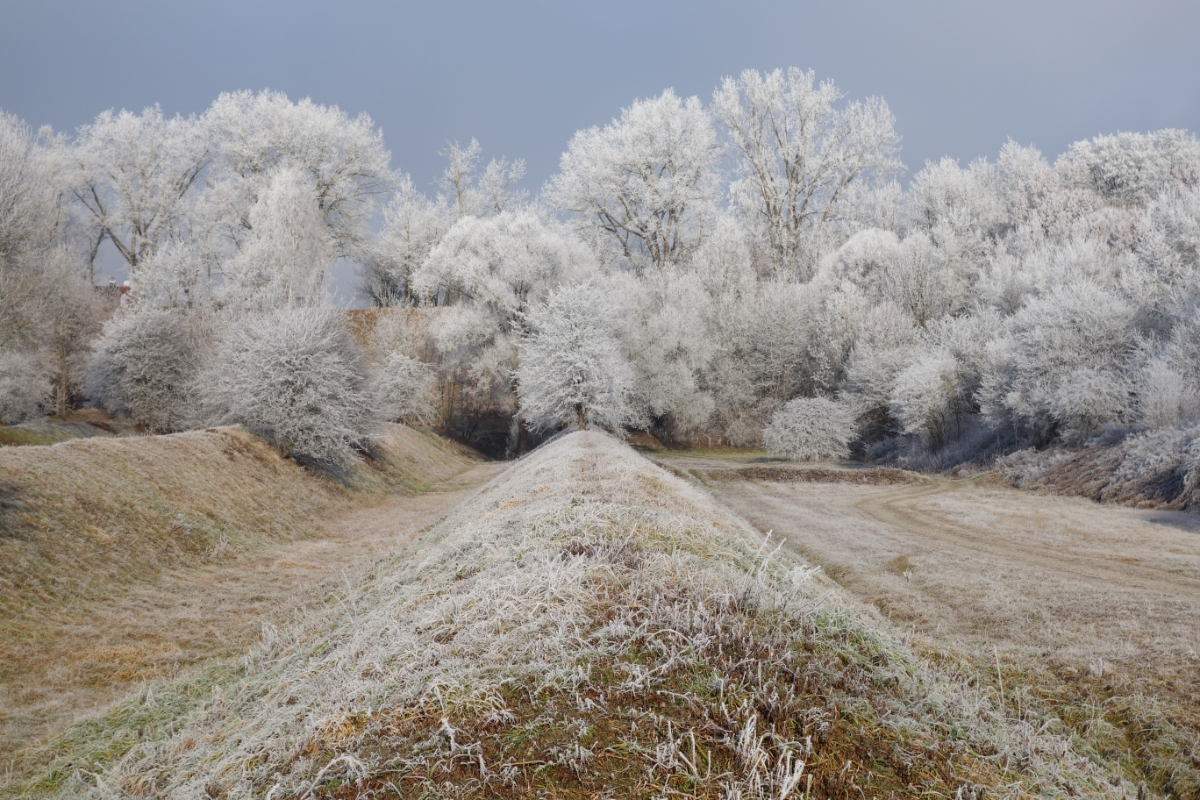 Mit Raureif überzogene Bäume