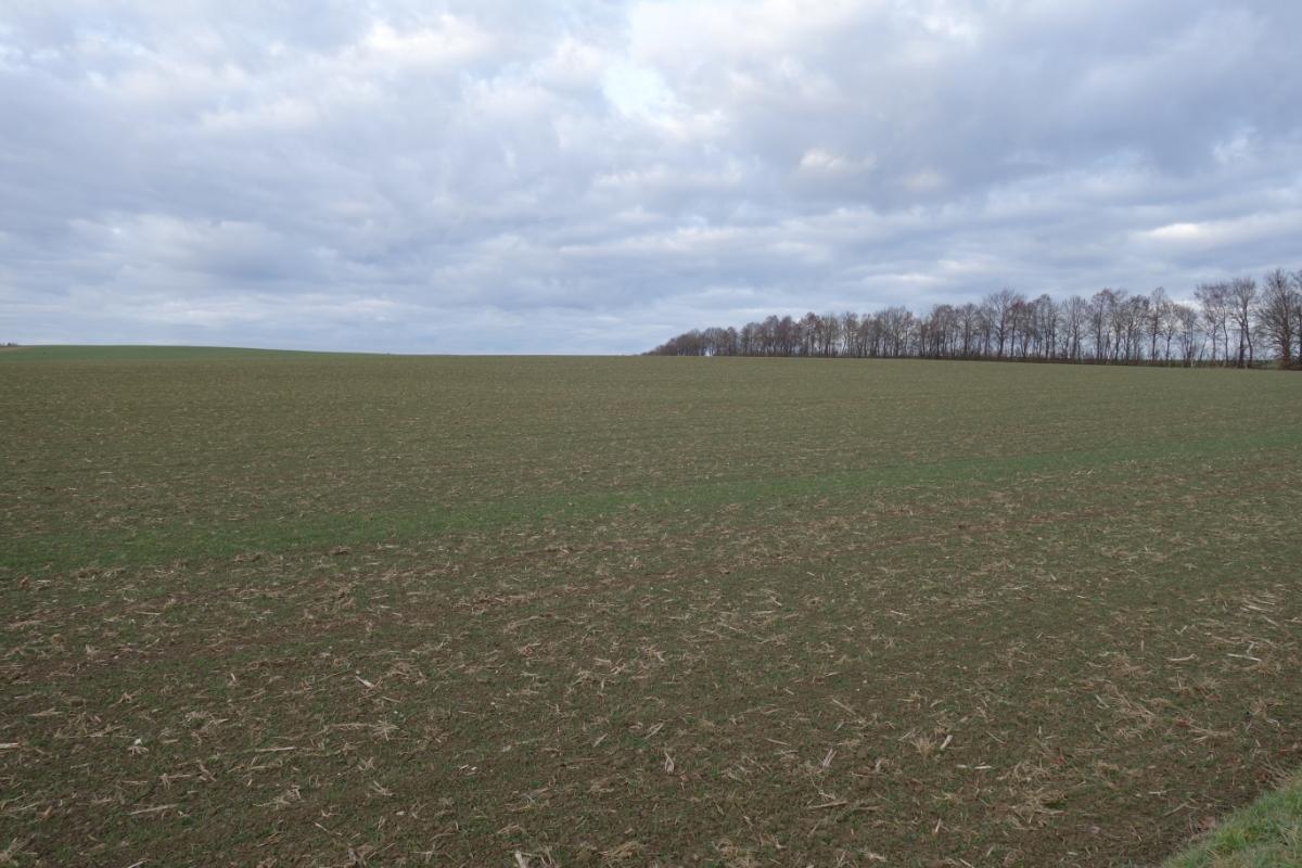 Brachliegendes Feld mit Baumreihe im Hintergrund
