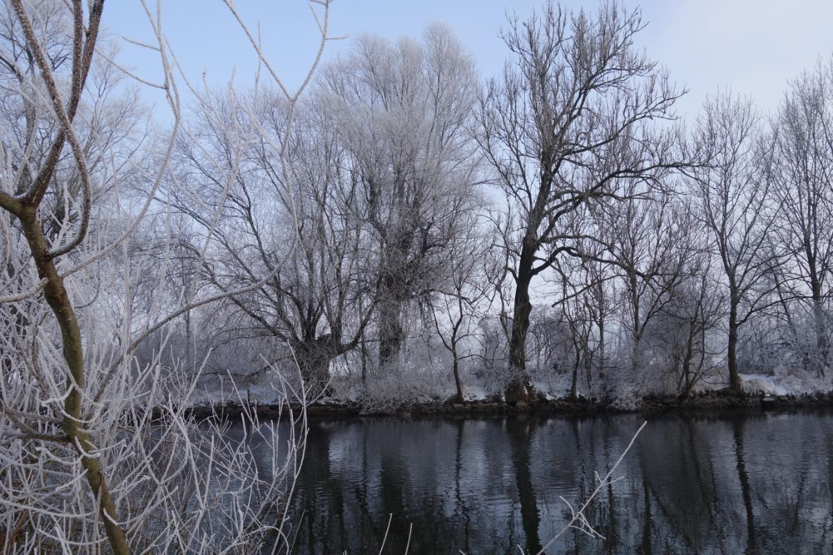 Amperufer mit raureif-überzogenem Uferbewuchs