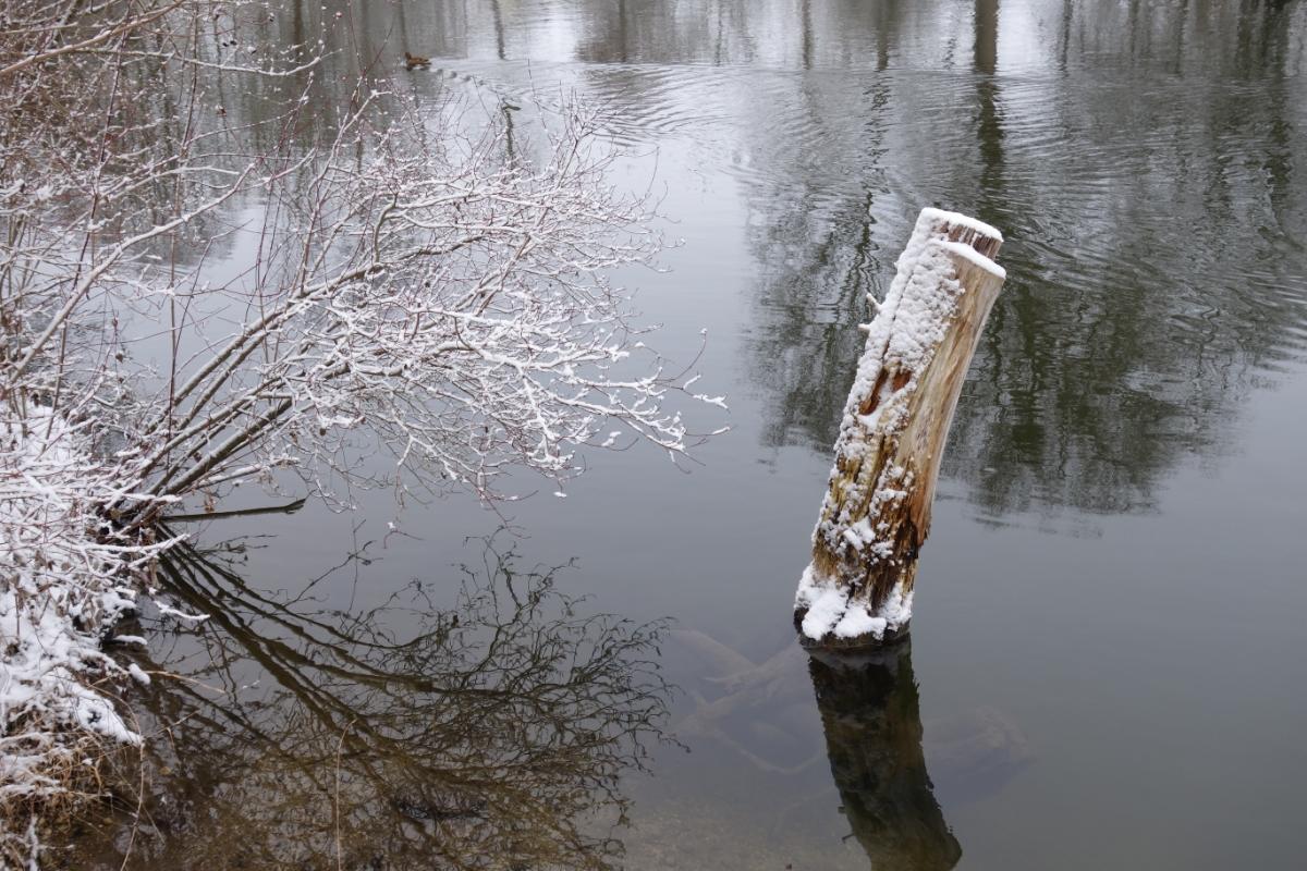 Verschneiter Baumstamm im Wasser