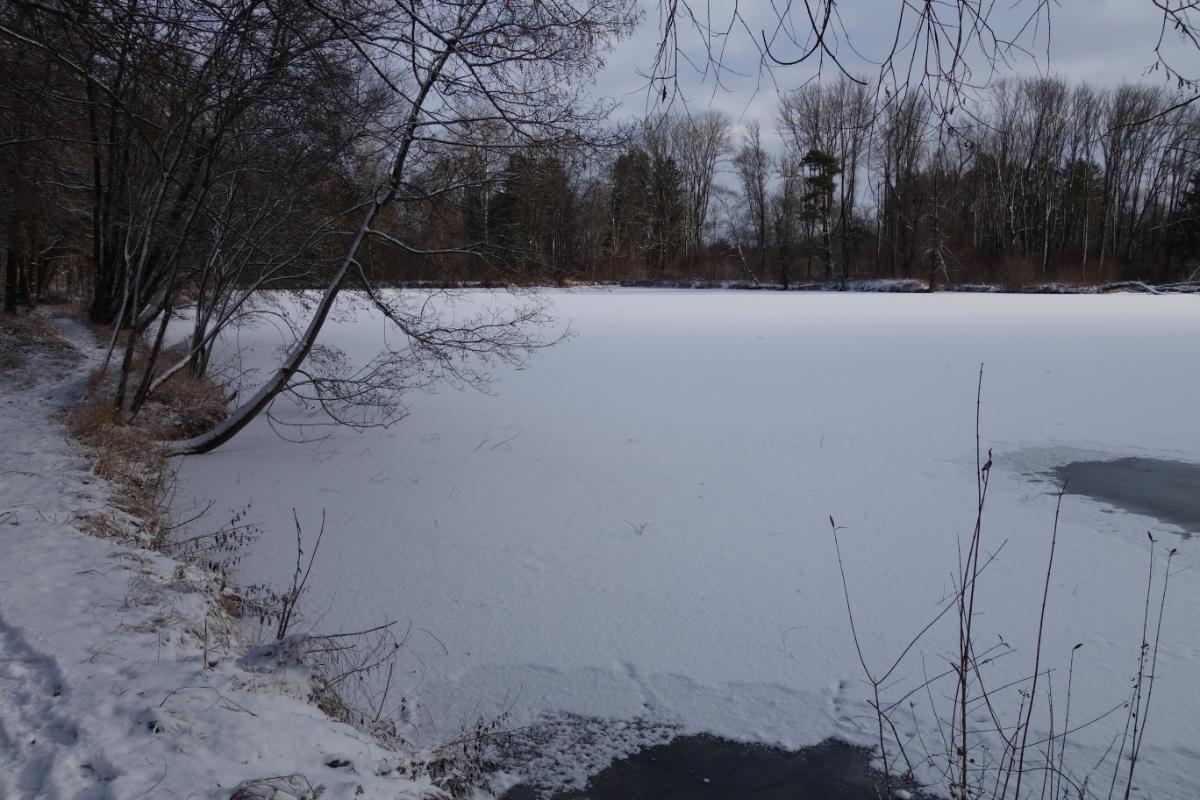 Der zugefrorene und zugeschneite Weiher an der Würmmühle
