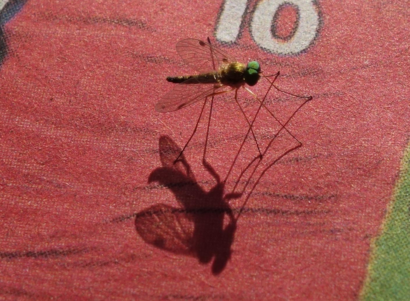Kleines Insekt sitzt auf Zeitungsseite