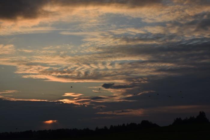 Reiher fliegen vor Sonnenuntergangshimmel