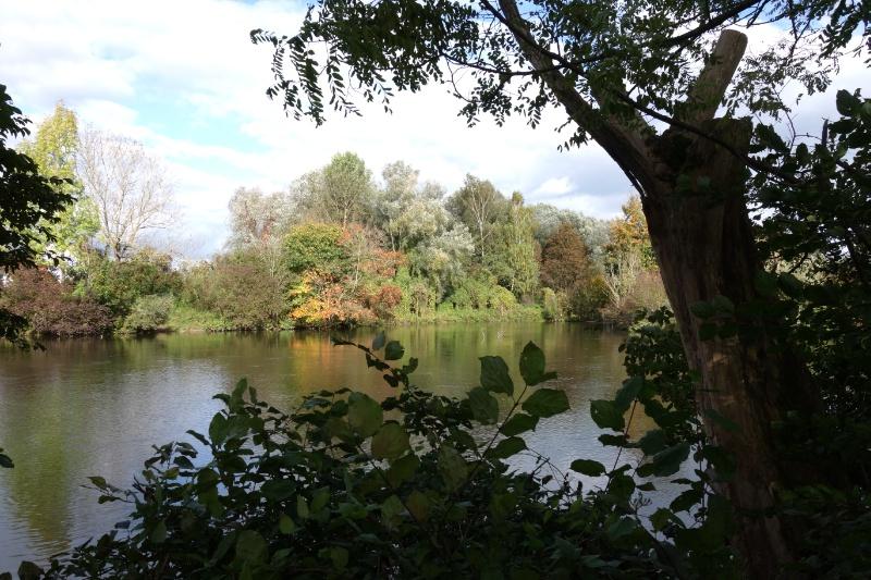 Amper mit herbstlichen Bäumen am Ufer