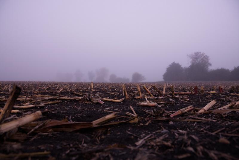 Abgeerntetes Maisfeld im Nebel