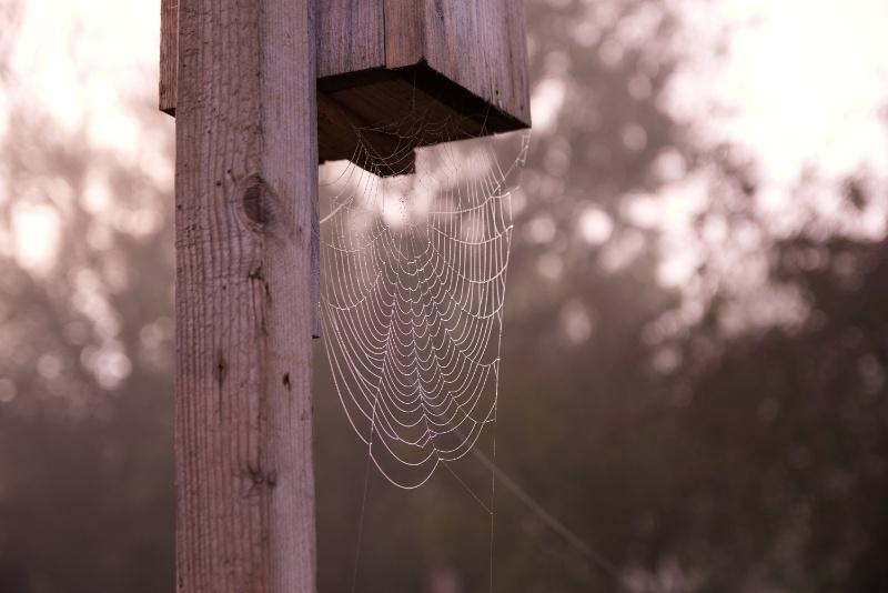 Spinnennetz im Nebeltau