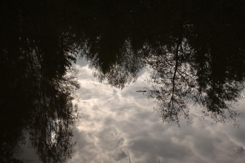 Bäume, die sich im Wasser eines kleinen Teiches spiegeln