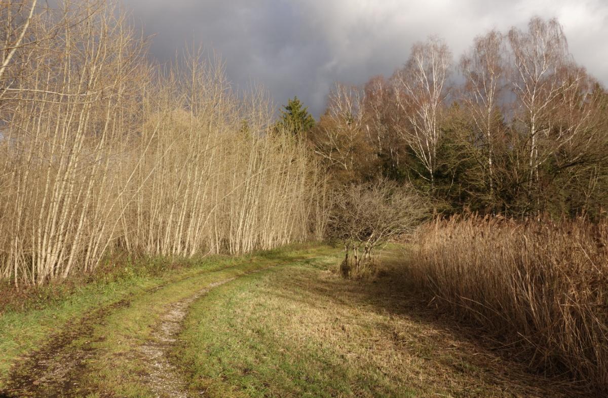 Sonnenbeschienener Waldrand
