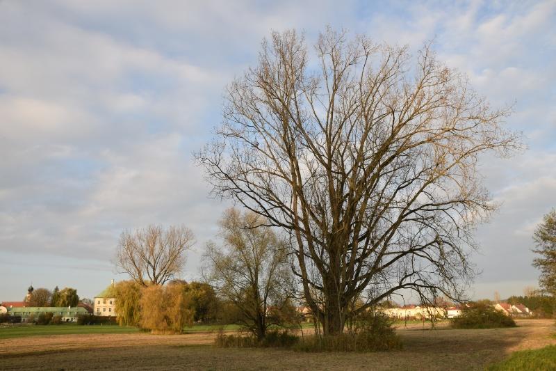 Prächtige Bäume am Ortsrand Unterweilbach