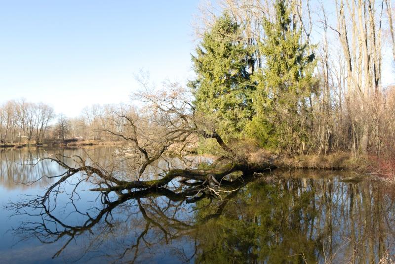 Mühlweiher mit Blick nach Osten