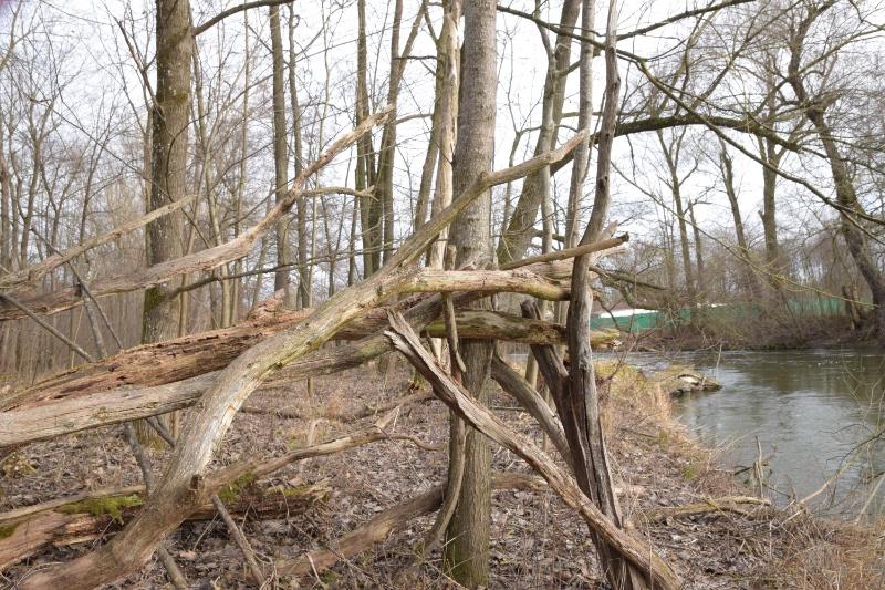 Verschachtelte Baumstämme und Äste