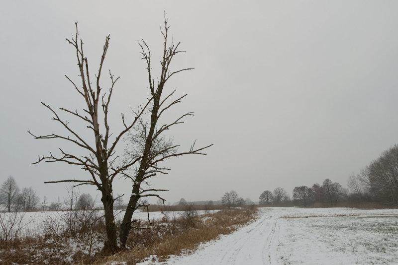 Kahler Baum in trister Winterlandschaft