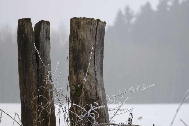 Zwei Baumstümpfe vor Waldrand