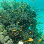 Korallengarten