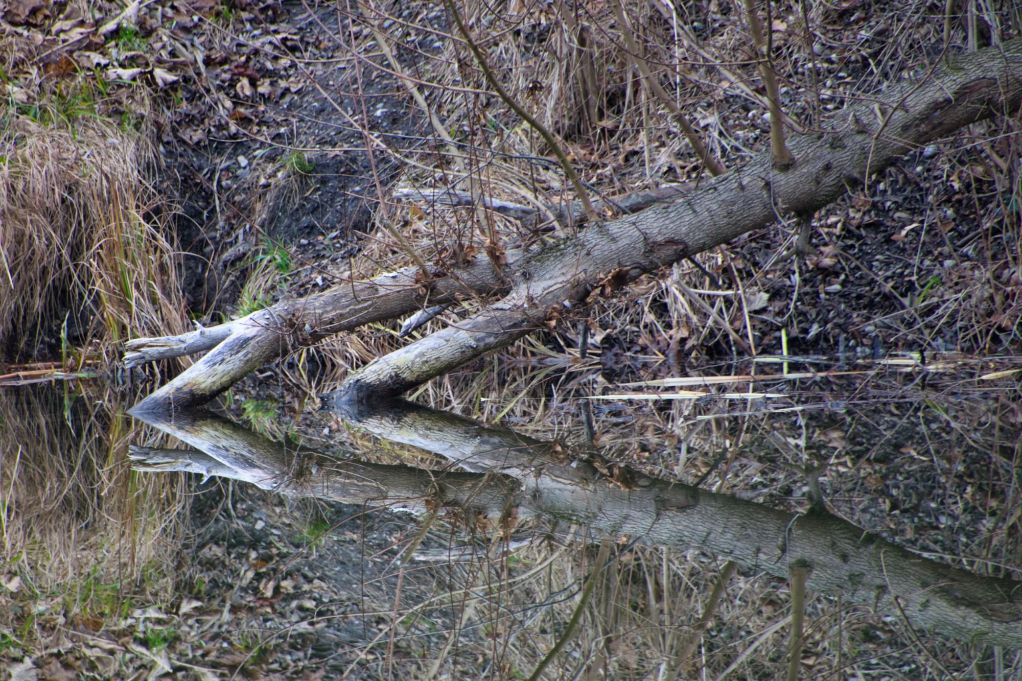 Baum mit Wasserspiegelung