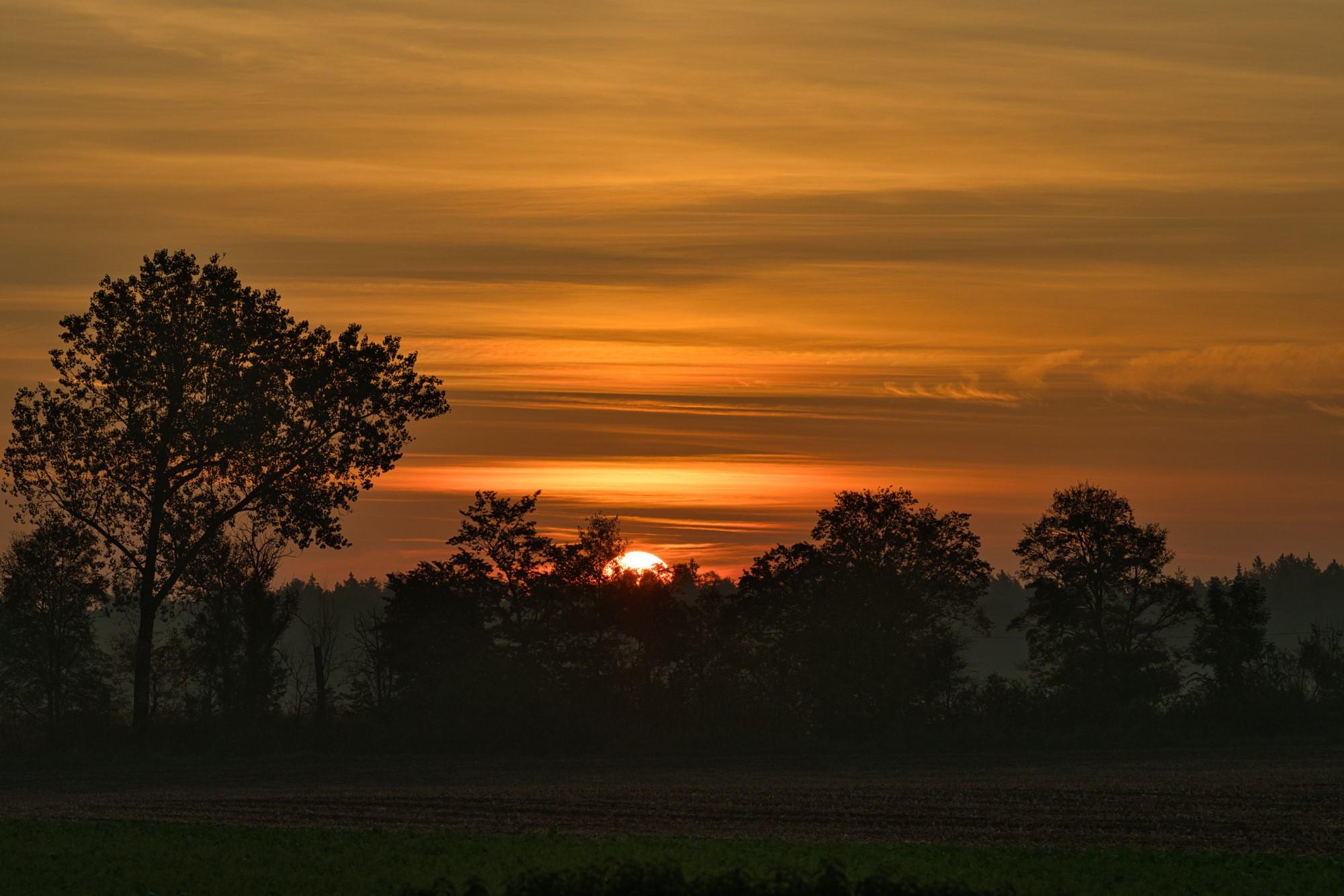 Sonnenaufgang im Moos